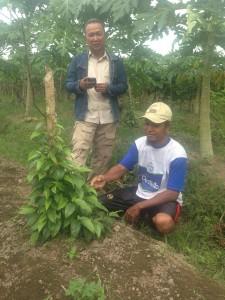 Arif Munandar bersama petani cabe jawa binaannya