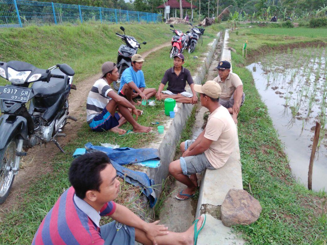 Perbincangan Sore Para Peserta dan Petani di Areal Lokasi Tanam Padi SRI Organik