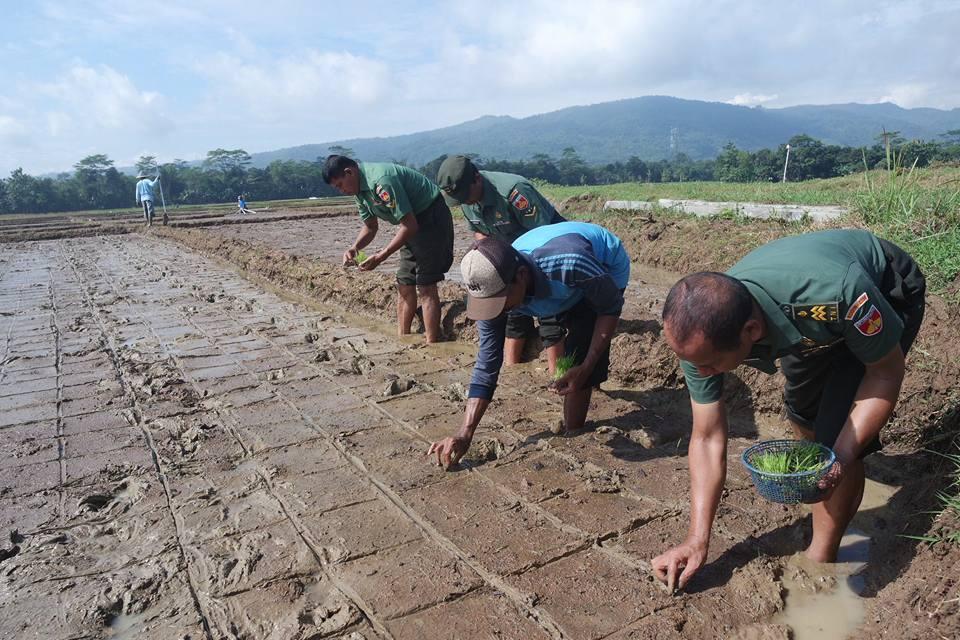 Masa Depan Petani Desa: Antara Pertanian dan Ekologi
